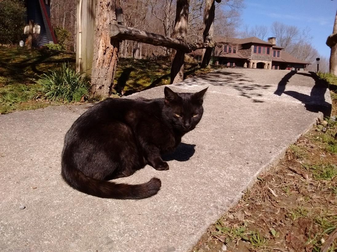 Hostel cat named Bear